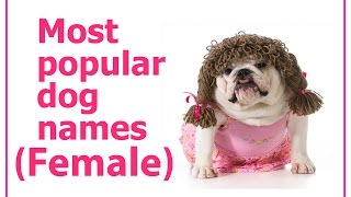Most Popular Female Dog Names (dog health tips)