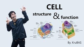 ชีววิทยาครูบาส เรื่อง cell structure and function #part1 plasma membrane and nucleus