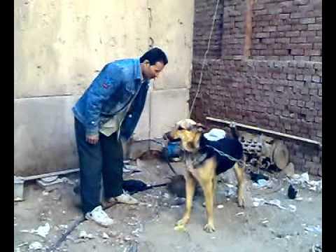 تدريب الكلاب على الاطاعة.mp4