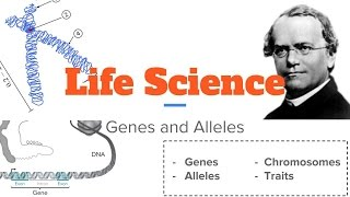 Life Science Genes and Alleles