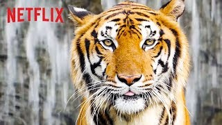 Best of Netflix Nature Docs | Happy Earth Day 🌎