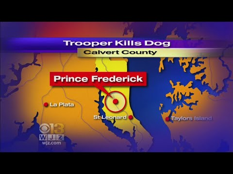 Xxx Mp4 Trooper Fatally Shoots Dog After It Attacked Woman 3gp Sex