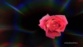 ♥GIOVANNI MARRADI - Just for you♥