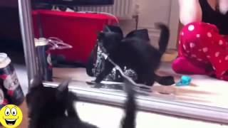 Funny Animals vs Mirrors Compilation 2015   Funny Videos