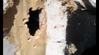 Rats eat chew through concrete to get into extension