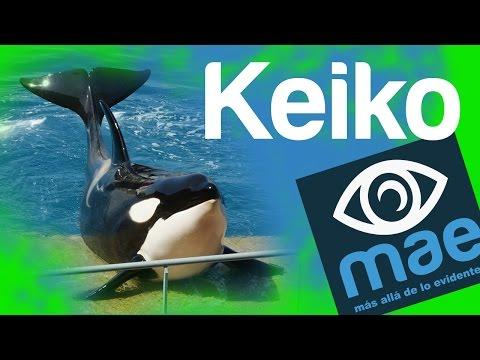 Keiko su historia y ¿cómo murio