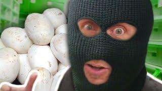 STEALING SNAKE EGGS!!! LORI'S ATTITUDE & NOAH WORKING!!! Brian Barczyk