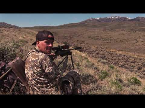 Xxx Mp4 Coyote Hunting HEADSHOTS Coyote Assassins Episode 34 3gp Sex