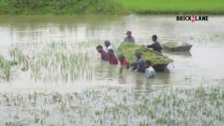টানাবৃষ্টি আর উজানের পানিতে তলিয়ে গেছে হবিগঞ্জের বোর ধান