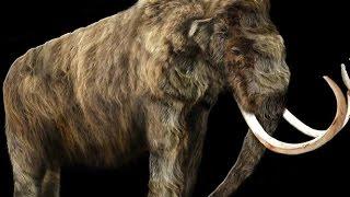 فريق من هيئة المساحة الجيولوجية يكتشف بقايا أحافير الفيلة العملاقة