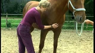 Cranio-Sacrale-Therapie eines Pferdes mit Andrea Mais