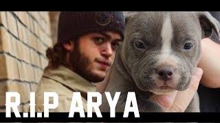 R.I.P Arya - Dwarf Mamba Dog (Tribute Music Video)