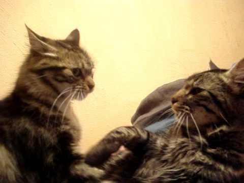 Gatos con problema