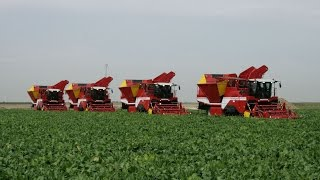 Beet Harvest XXL | 4x GRIMME MAXTRON 620 | self-propelled Beet Harvesters