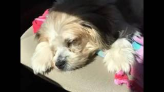 Littl Candy needs a forever home
