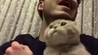 catdance.avi