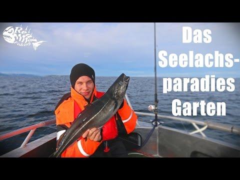 Das Seelachsparadies Garten - Angeln vor Fosen