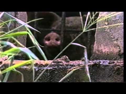 watch Terráqueos (Earthlings-2005) (Multi-subtitles)
