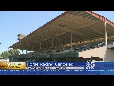 Xxx Mp4 HEAT WAVE Soaring Temperatures Send Residents Looking For Relief Cancel Horse Races At County Fair 3gp Sex