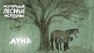Маленькие лесные истории 🍂 Луна 🌙 Новая серия
