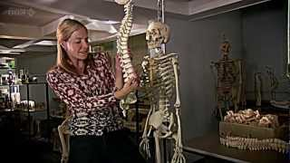 BBC Origins of Us 1 of 3 - Bones HDTV - Dr Alice Roberts