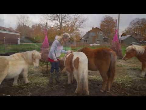Xxx Mp4 Meet My Horses 3gp Sex