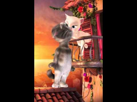 Jose gata peidando i gato cantando