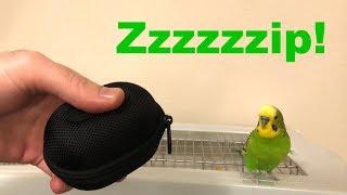 Bird Imitates Zipper Noise - funny!!