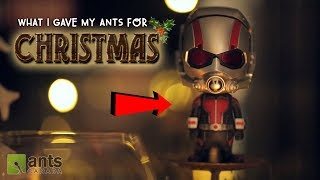WHAT I GAVE MY ANTS FOR CHRISTMAS!