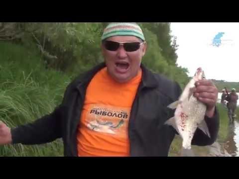 ловля на спиннинг на ветлуге