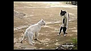 Gadające kotki, wściekłe i zabawne