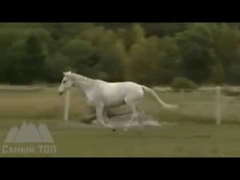 Horses PUSHED TO THE EXTREME & get their revenge against stupid HUMANS
