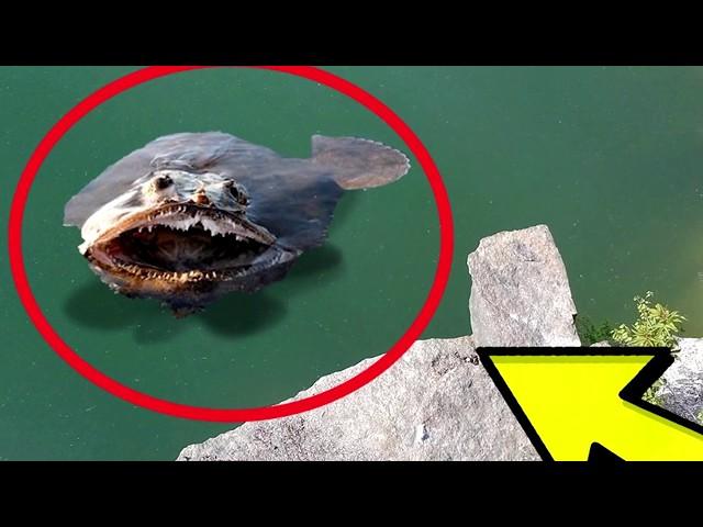 Extinct Animals CAUGHT on Camera