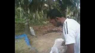 Anggota Kelompok Tani Nur Al Amin Gampong Kuta Meuligou Sawang Aceh Utara MOV0311A