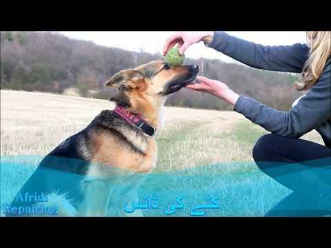 Xxx Mp4 Dog And Wamen Xxx Dancing Video Master Noorali Afridi 3gp Sex
