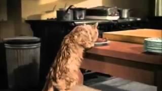 Gato cachorro e os três patetas