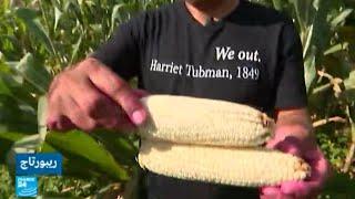السلفادور.. سعي للتحول إلى الزراعة البيولوجية