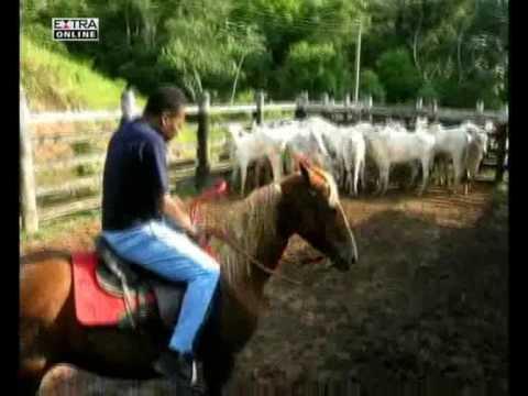 Pelé dá uma de rei do gado em sua fazenda