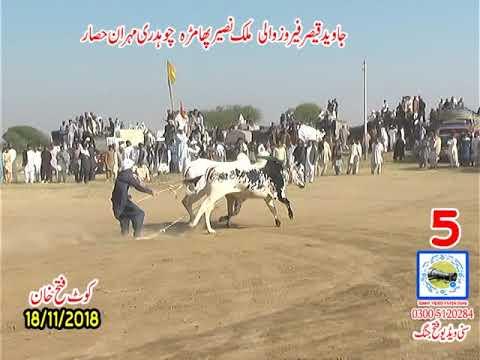 Xxx Mp4 Bul Race In Pakistan Sunny Video Fateh Jang 18 11 2018 NO5 3gp Sex