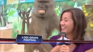 BEST FUNNY NEWS BLOOPERS 2017 - Unforgettable Moments Caught on Live TV 2017 - LIVE TV FAILS 2017
