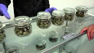 MMJ Canada Dispensary in 4K