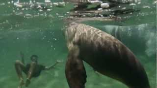 Spontaneous travel - Swimming with Seals and Dolphins @ Bairds Bay, SA