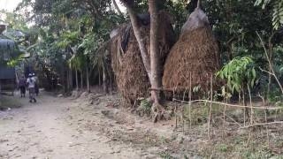 bangladesh village,gram bangla
