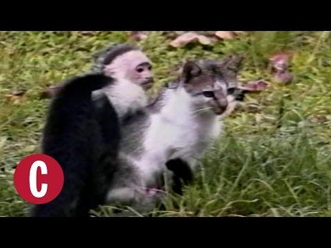 5 Unlikely Pairs of Animal Friends | Cosmopolitan