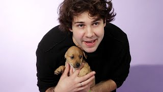 David Dobrik Plays With Puppies While Answering Fan Questions