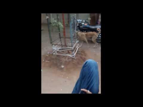 Xxx Mp4 Dog Rep Show In Video 3gp Sex