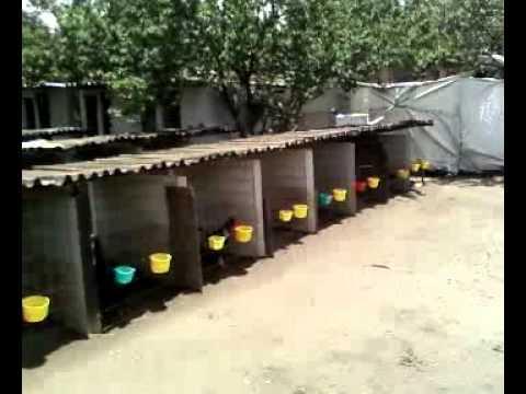 granja san martin venta de gallos