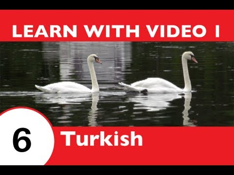 Learn Turkish with Video - This Turkish Lesson Is NOT Just for the Birds!!
