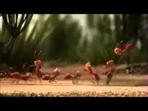 Inteligent Ants Strategy Plan whatsapp videoz