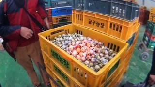 farmLife: 450,000 quails